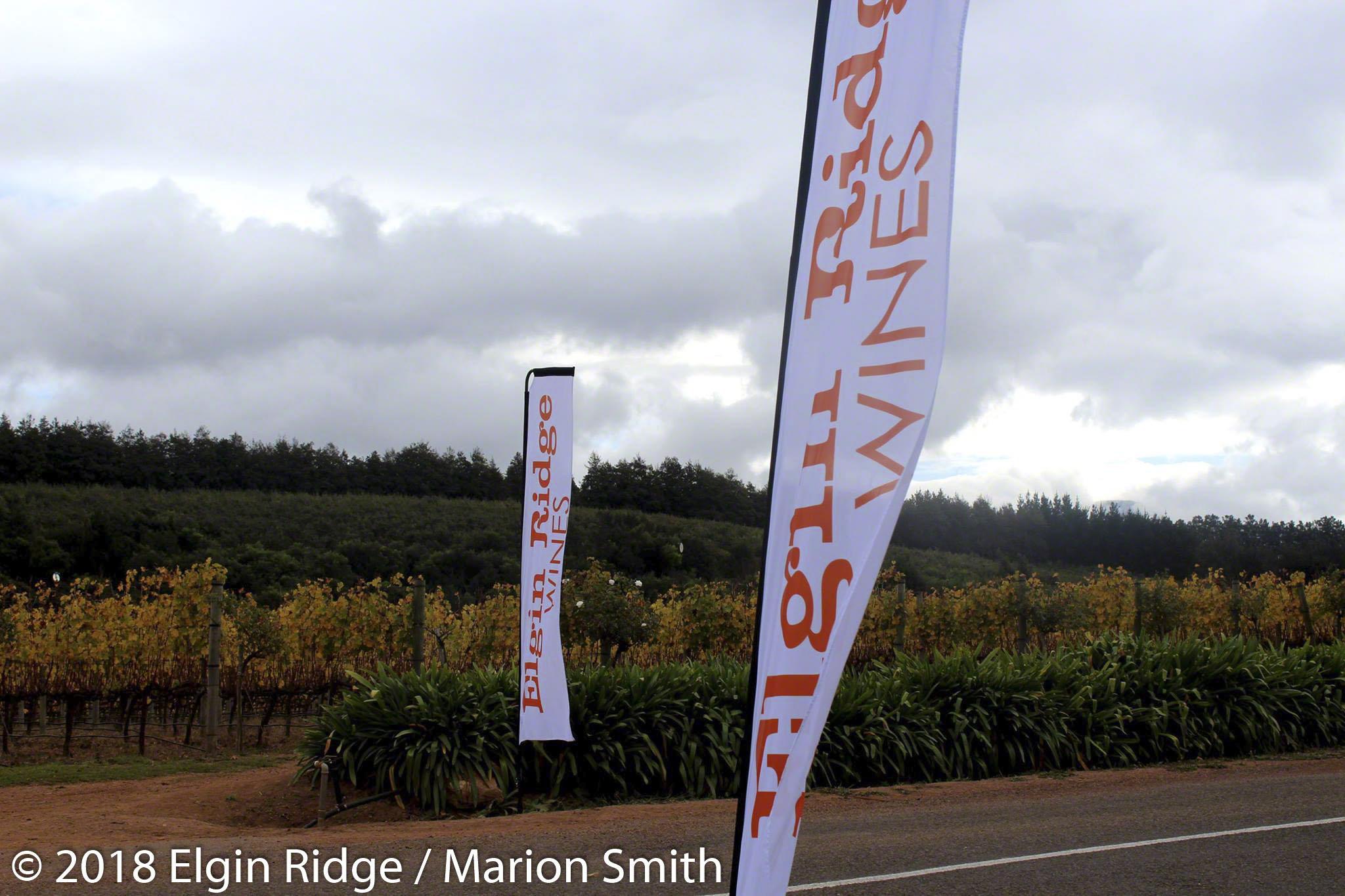 Elgin Ridge open for tastings