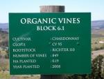 Organic Vines Block 6.1