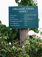 Elgin Ridge organic vines